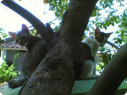 atap dan oleng lagi nyantai di pohon