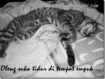 oleng tidur di tempat tidur